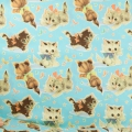 Baumwollegewebe 50's Vintage Wrap - Kitty Turquoise x10cm